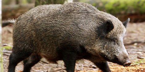 Danni da fauna selvatica: Coldiretti chiama la Regione