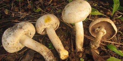 Intossicazione da funghi a Sassari