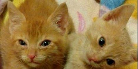 «nessuna tassa sugli animali domestici»