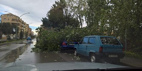 un albero cade su due auto