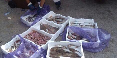 Ristoratore shock: pesce nel cassonetto
