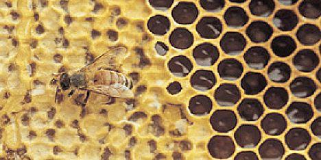 Produzione miele: 90mila euro dalla Regione