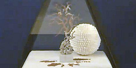 Museo del corallo gli orari di apertura for Orari apertura bricoman cagliari