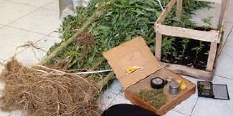 Marijuana in giardino in manette due fratelli a loiri for Temporizzatore per irrigazione